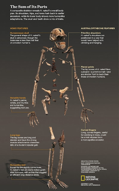 Another twist in the Homo naledi tale