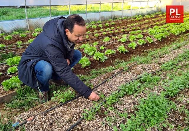 Mulch, el residuo orgánico que se usa contra las malas hierbas