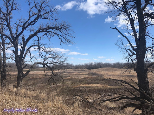 From atop a kame, Bluff Spring Fen Forest Preserves unfolded before us.
