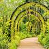 Vẻ đẹp không thể rời mắt của 7 vườn hoa lan nổi tiếng Thế Giới