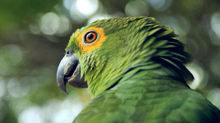 stop parrot biting