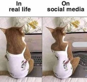 Selfie Meme, Cat Meme,