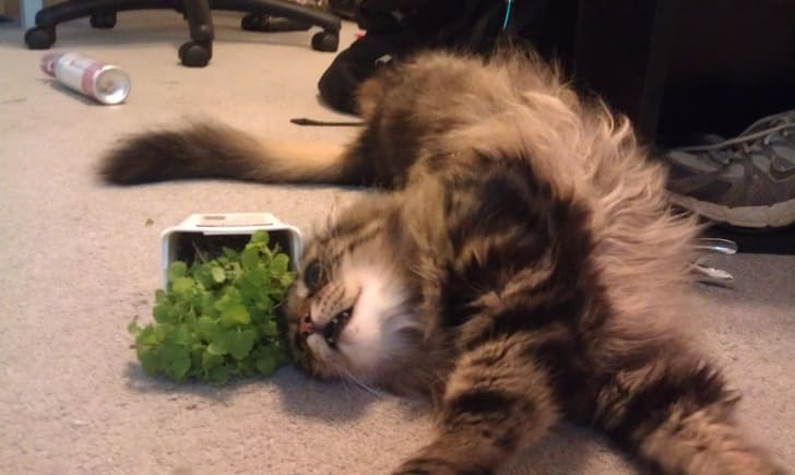 10 Pictures That Can Go Crazy With Or Without Catnip