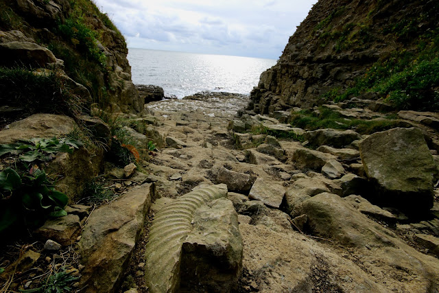fosil near Seacombe Quarry