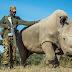 Sudan, the Last Male Northern White Rhino, Has Died