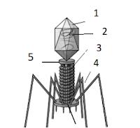 gambar bagian bagian virus