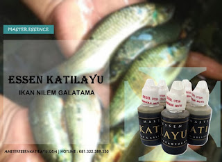 Essen Katilayu Ikan Nilem Galatama