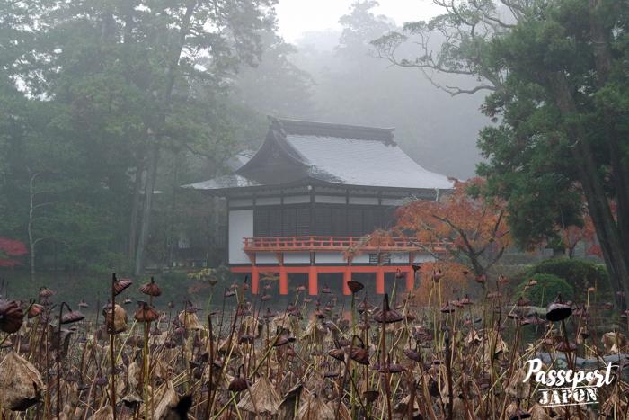 Etang dans la brume, sanctuaire Usa-jingû, Oita