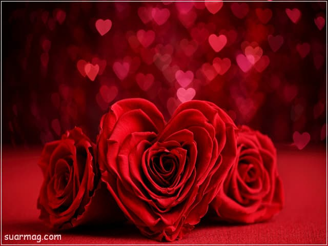 خلفيات ورود جميلة جدا 19 | Beautiful Roses Wallpapers 19