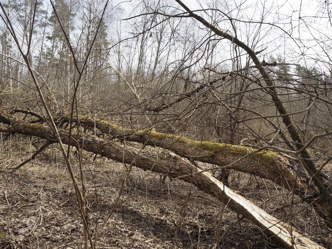 Senųjų kaimų takas miške