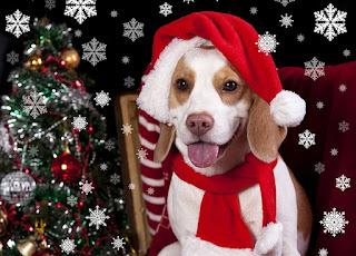 orman • köpekler • bak • doğa • poz • Park • koyu arka plan • iki • köpek • bitkiler • bebek• çift • köpek yavrusu • beyaz • bir çift • Labrador • İkili • yalan • Av köpeği • iki köpek • yüzler• anne ve çocuk