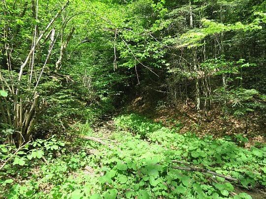 Bezimienny potok pokryty zieloną roślinnością.