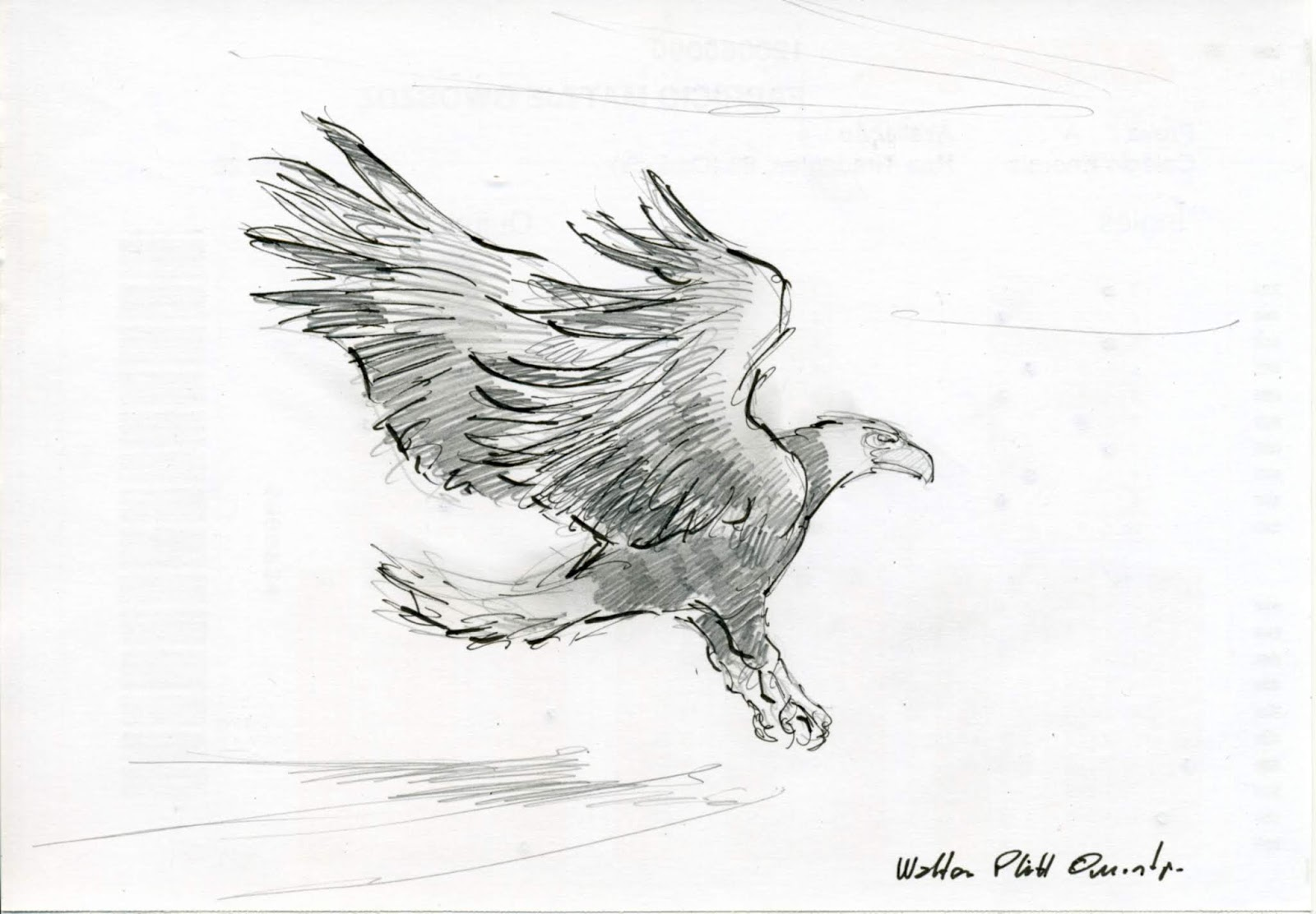 Eagle pencil sketch