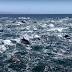 Vídeo flagra centenas de golfinhos nadando juntos; assista