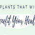 8 Plants that will incredibly benefit your health #infographic