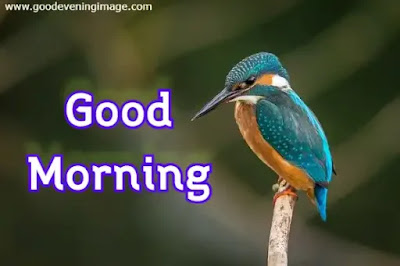 Good Morning Happy Monday pictures