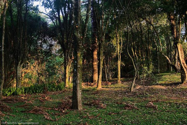 Árvores no bosque ao longo do Córrego Tarumã