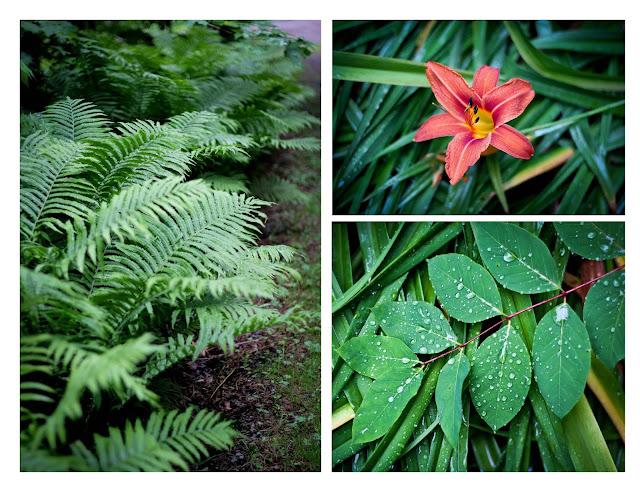 fleurs,cueillir,sauvages,quebec,champs,bouquet,photo-emmanuelle-ricard