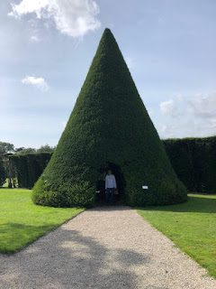 Conical Yew at Antony