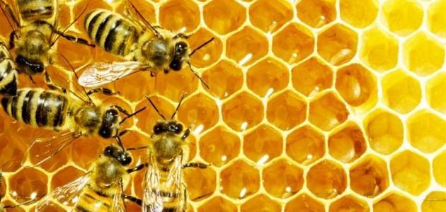 خلية النحل