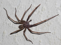 Do you have spiders in your home?