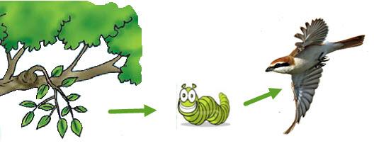 rantai parasit
