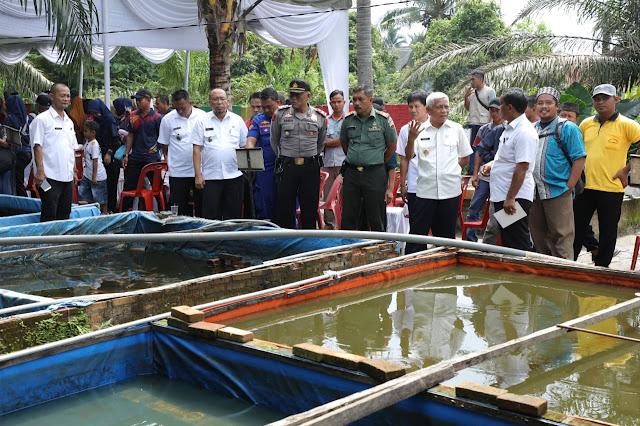 Wakil Bupati Asahan Surya meninjau kolam ikan.