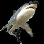 shark in spanish, sea animals in Spanish, animal names in Spanish, bear in Spain, pets in Spanish, farm animals in Spanish, list of animals in Spanish, ocean animal in Spanish, marine life, marine animals