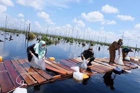 Bupati Masnah Bersama Pemprov Jambi Tabur Benih Ikan Toman Di kanal Karhutlah Kumpeh Ilir