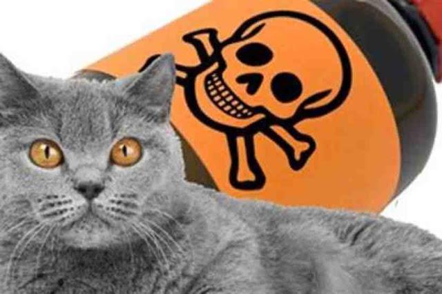 Cara Mengobati Kucing Yang Keracunan