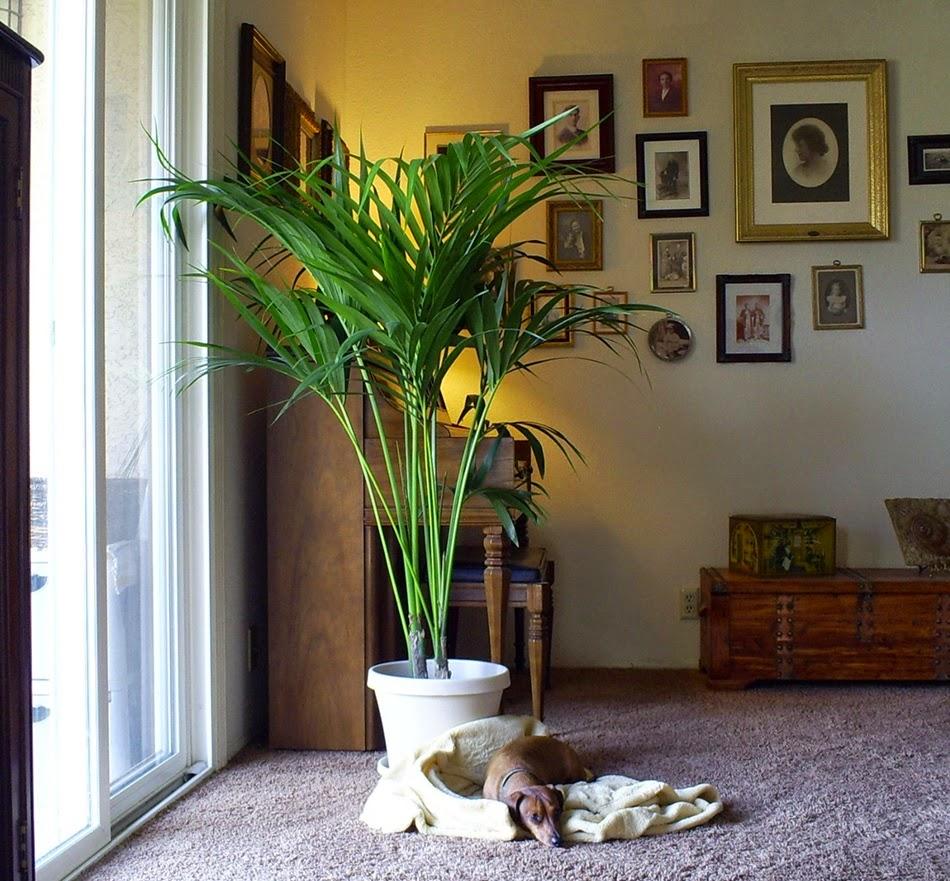 Observa y decora plantas de interior for Plantas crasas interior