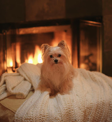 dog relaxing on ottoman next to a fire