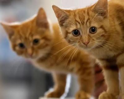 11 Hal yang Hanya Dipahami Oleh Pemilik Kucing