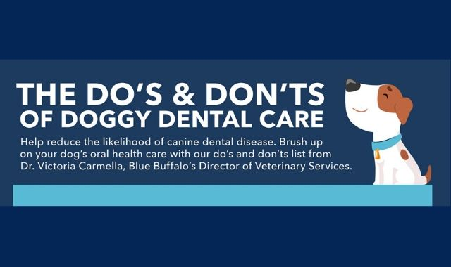 Dental Care For Your Dog