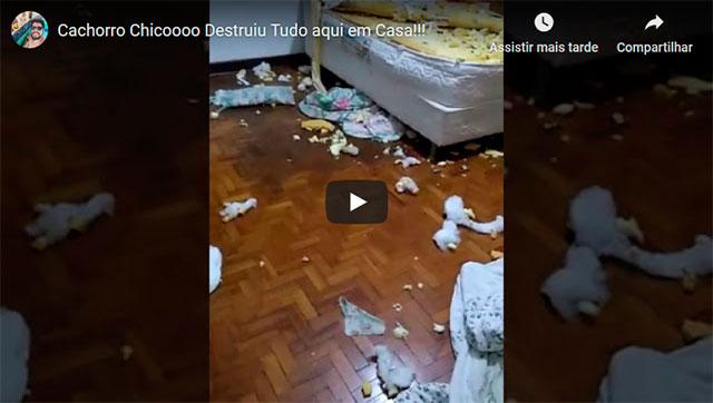 https://www.ahnegao.com.br/2019/07/o-dia-que-o-cachorro-chico-destruiu-tudo-que-havia-em-casa.html