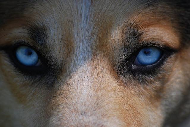 cosa fare in caso di incontro con un lupo