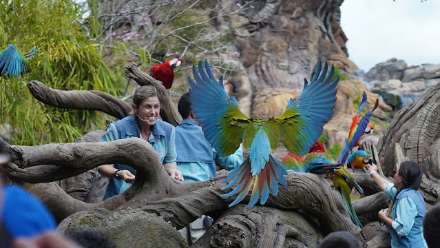 Imagen La magia de Animal Kingdom de Disney
