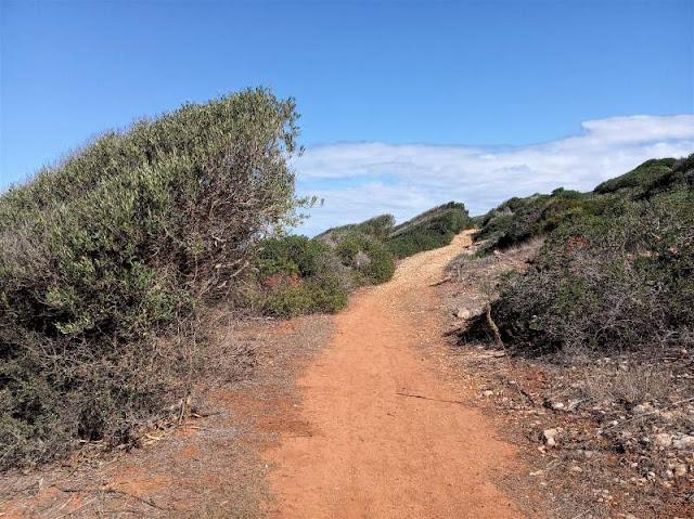 vegetazione lungo il sentiero isola di levanzo