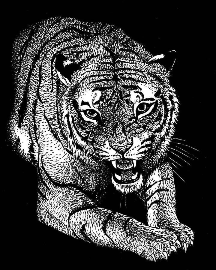 10-Tiger-Ashley-Habernal-www-designstack-co