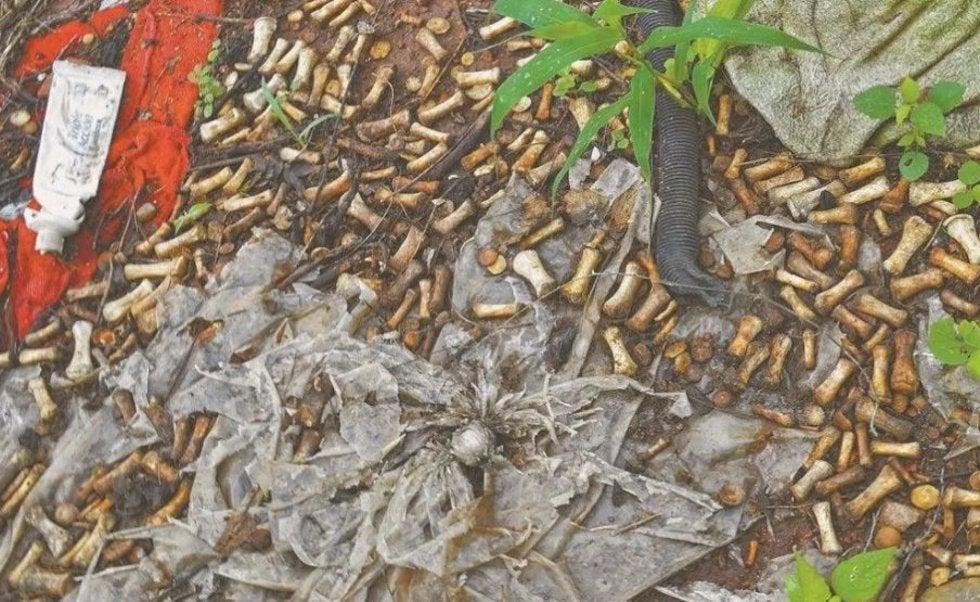 Terror en Sinaloa... encuentran en Culiacán 2 mil restos oseos de niños, adolescentes y adultos