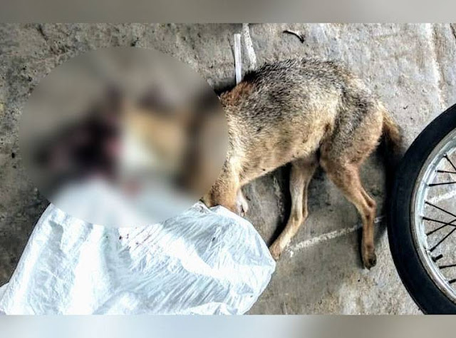 Chennai: 12 people arrested for feeding Siyar with explosive meat