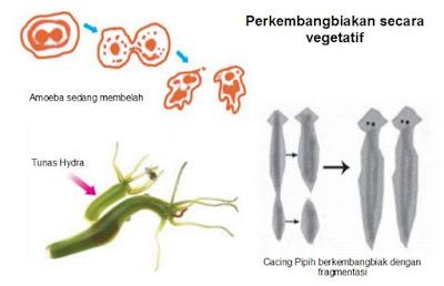 Macam-macam Perkembangbiakan Hewan secara Vegetatif dan Generatif