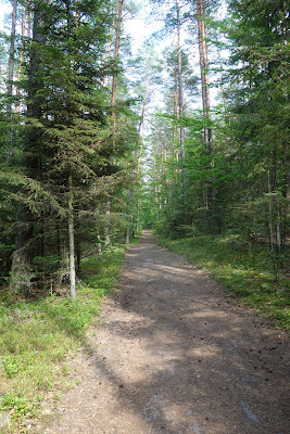 Lasy między Piaseczną a Bukową Górą