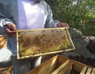 Produção de mel cresce na Paraíba e atividade pode gerar lucro de mais de 300%