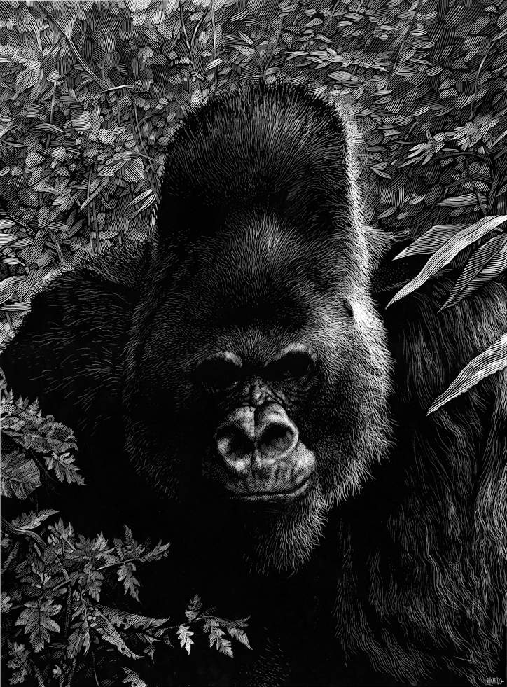 13-Gorilla-Ricardo-Martinez-Wild-Animals-inside-Scratchboard-Drawings-www-designstack-co