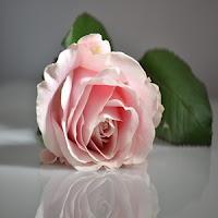 http://assalafiyyat.blogspot.co.id