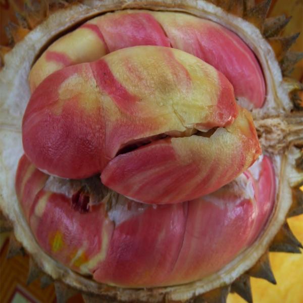 Durian Pelangi, Khasiat Durian Pelangi, Manfaat Durian Pelangi