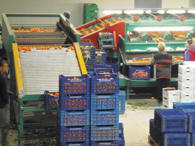 Βιολογικό συσκευαστήριο στην Αργολίδα για αποστολές στην Ελβετία