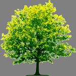 tree in spanish