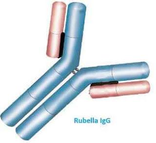 rubella igg igm testi